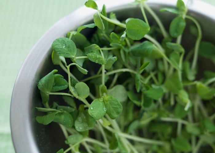 Beneficios alfalfa
