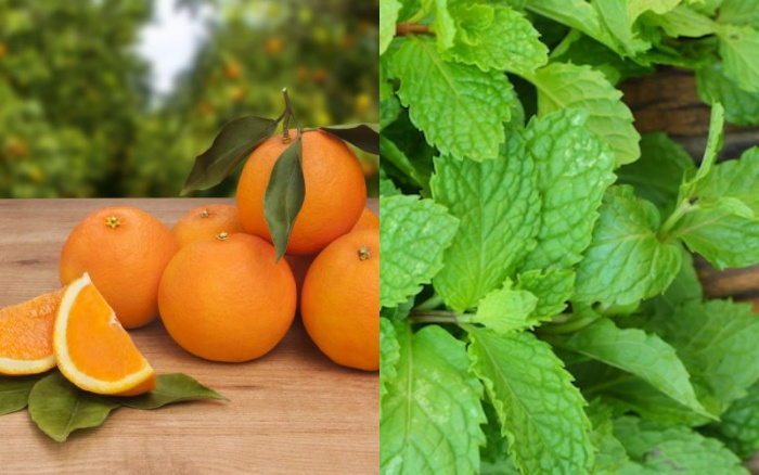 Infusión menta naranja
