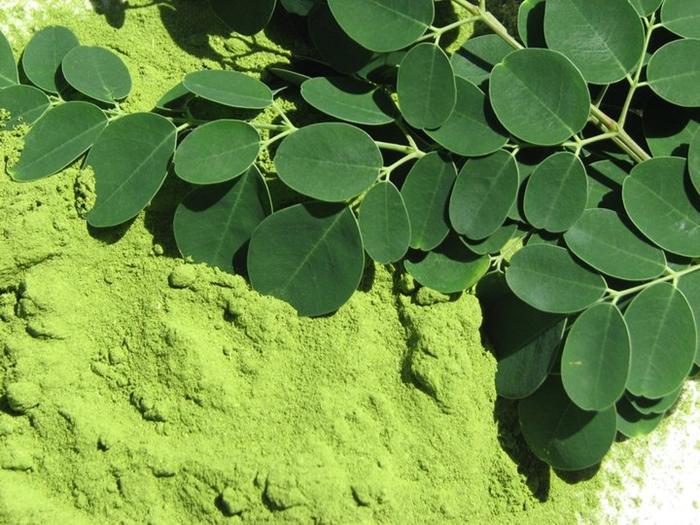 polvo-y-hojas-de-moringa